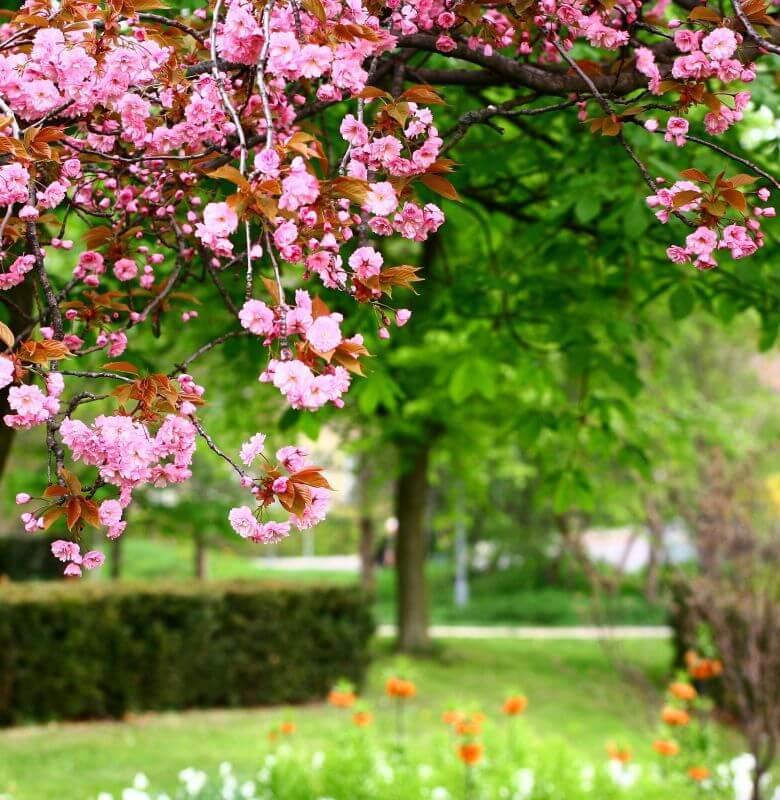 bell_jardin_arbori_plante_iasi